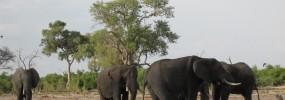 Hatseflatsend door Afrika