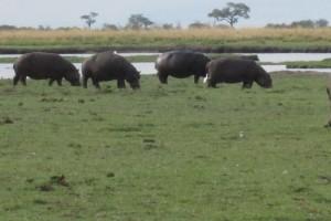 Het nijlpaard en de liefde