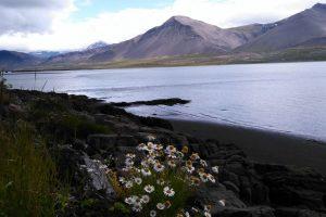 IJsland… land van grote eenzaamheid