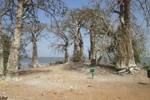 Boten, baobabs en slaven