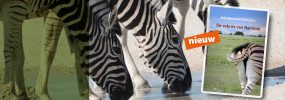 De zebra's van Namibië