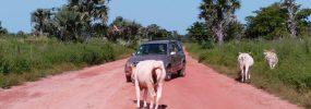 In Gambia is de weg van iedereen…